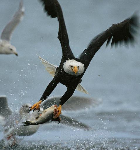 bald eagle jet boat tour